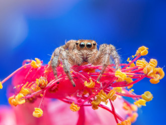 jumping spider nature 1150 7950
